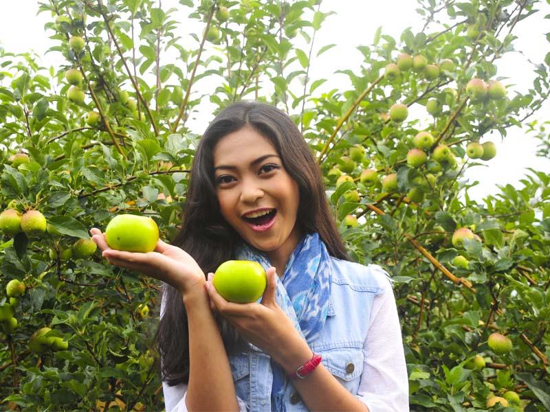 Tempat Wisata di Malang - Wisata Petik Apel Malang