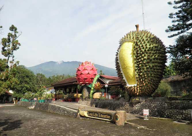 Tempat Wisata di Bogor - Warso Farm