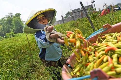 5 Universitas Jurusan Pertanian Terbaik di Indonesia