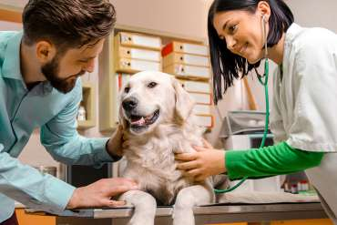 10 Prospek Kerja Lulusan Kedokteran Hewan Serta Gajinya