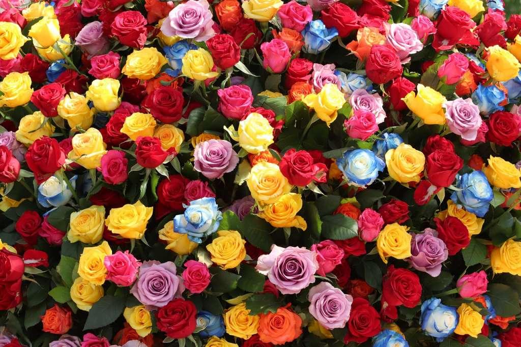 10 Contoh Gambar Bunga Mawar Yang Cantik Dan Artinya